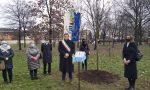 Corbetta commemora i defunti Covid con un ippocastano nel parco