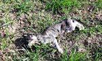 Trovati sette gatti morti, parte l'esposto in Procura
