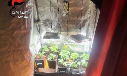 18enne coltivava marijuana in casa: arrestato