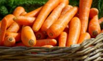 In regalo con i nostri settimanali i semi di carota