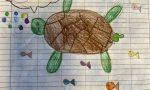 Dopo un koala, gli alunni adottano una tartaruga marina