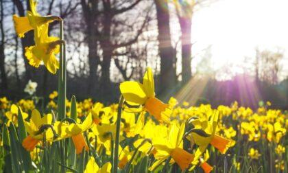 Previsioni meteo di Pasqua e Pasquetta: sole e nuvolosità variabile in Lombardia