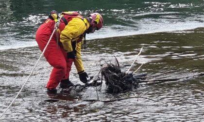Airone ferito nel Naviglio: salvato dai pompieri