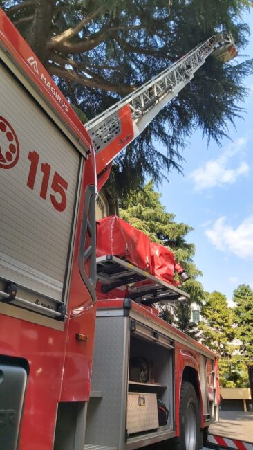 Ramo pericolante, intervengono i pompieri