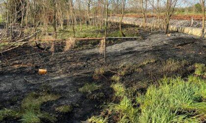 Sterpaglie avvolte dalle fiamme, pompieri in azione