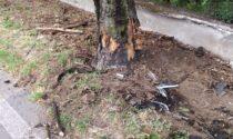 Si schianta contro un albero: grave un 43enne