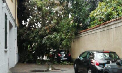 Albero si schianta contro una casa e un'auto