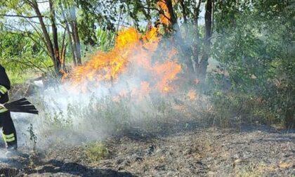 Campo in fiamme, spento dai pompieri