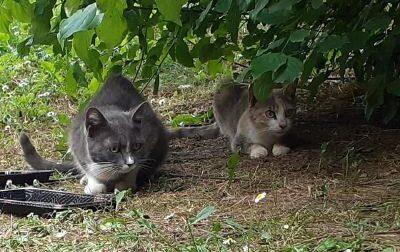 Cinquestelle in aiuto delle gattare e delle colonie feline