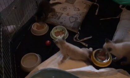Tre gattini bisognosi di cure cercano casa
