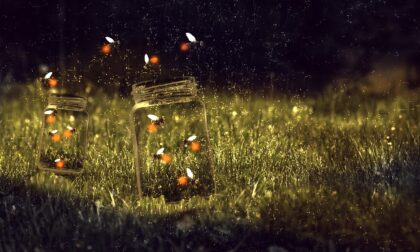 Al bosco di Vanzago tornata la passeggiata notturna tra le lucciole