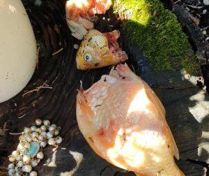 Vandali distruggono le corone del rosario e sgozzano i pesci rossi del laghetto