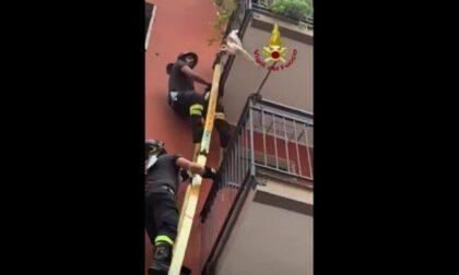 Cane appeso al balcone: il video del salvataggio in extremis dei Vigili del fuoco