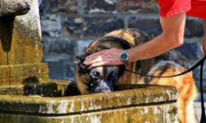 Ondata di caldo: le raccomandazioni di Enpa per proteggere gli animali