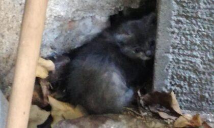 """Gattini abbandonati al cimitero, il sindaco: """"Adottateli"""""""