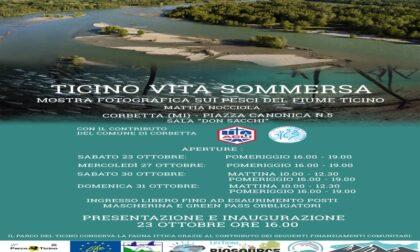 """Mostra fotografica """"Ticino vita sommersa"""", di Mattia Nocciola"""